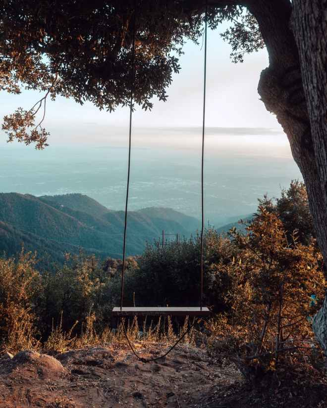 photo of swing under tree